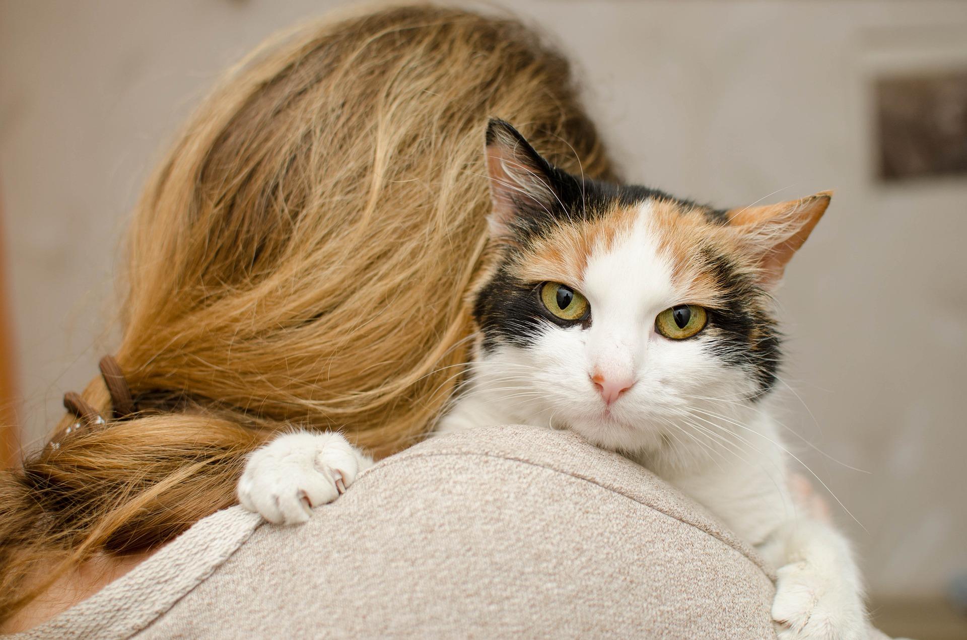 """Tratada como """"louca"""", mulher que abrigou 150 gatos abandonados em casa será indenizada"""