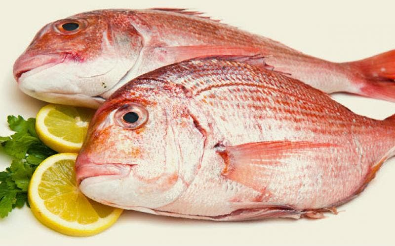 Cozinha Experimental: Secretaria de Educação desenvolve projeto em parceria com a Secretaria de Pesca visando crescimento da economia local