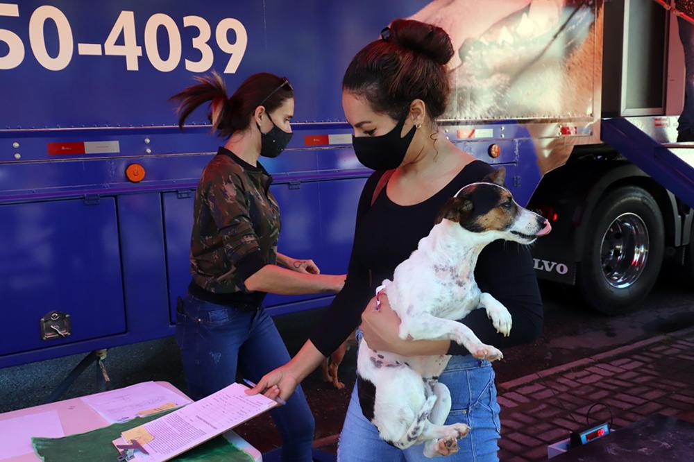 Prefeitura promove castração gratuita em parceria com ONG Capvara: 100 animais serão castrados ao longo do dia