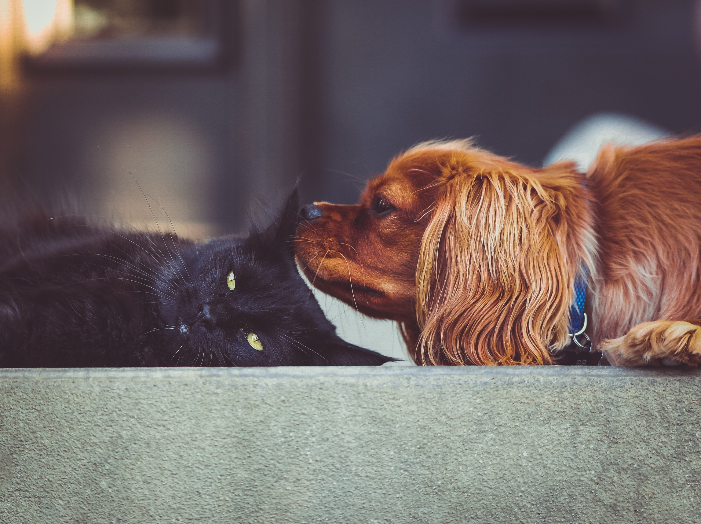Mundo Pet: Vetoquinol lança Flowcare, suplemento alimentar à base de metionina, aminoácido essencial para cães e gatos