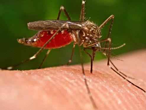 Malária: casos no Brasil estão em queda, afirma infectologista