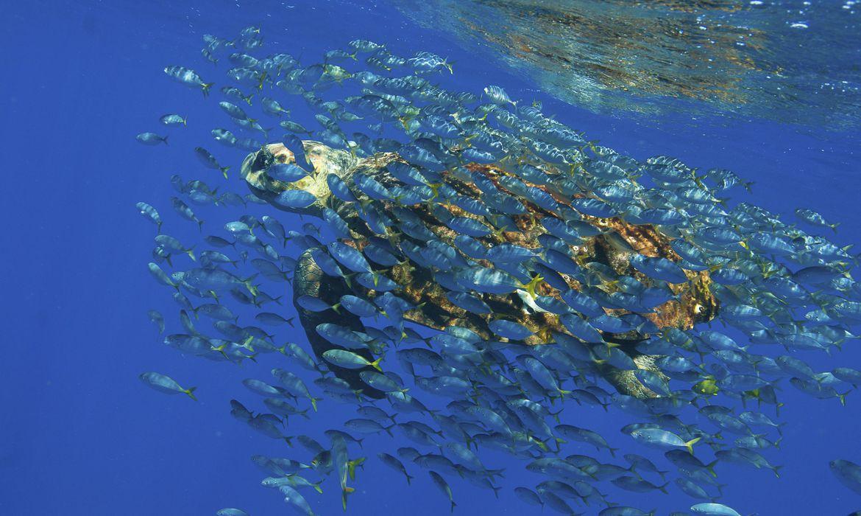 Desenvolvimento Sustentável: debate marca lançamento da Década da Ciência Oceânica no Brasil