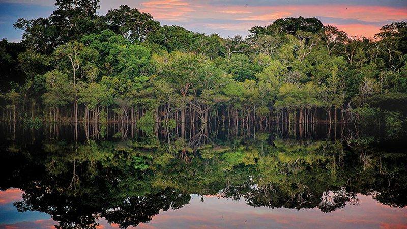 'Entendendo a Amazônia': Evento é lançado oficialmente hoje, com objetivo de discutir a importância e a preservação desse importante bioma