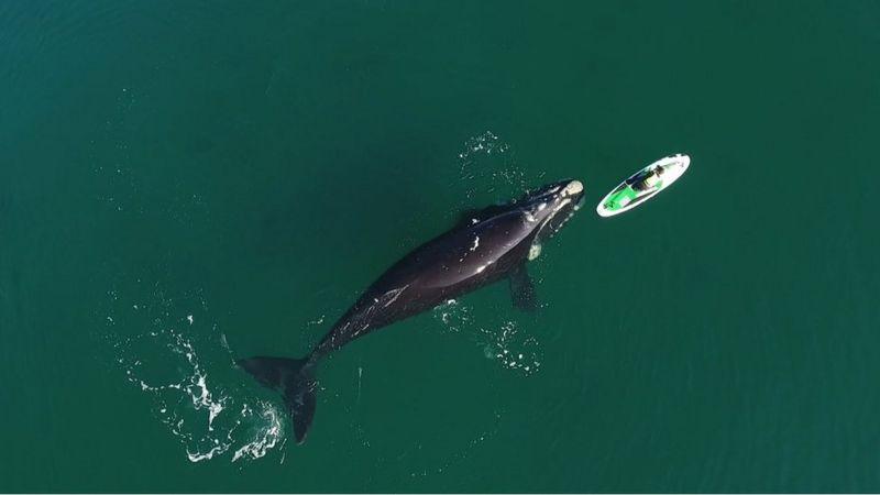 """""""Natureza Fantástica"""": impressionante encontro entre baleias e banhista na Argentina"""