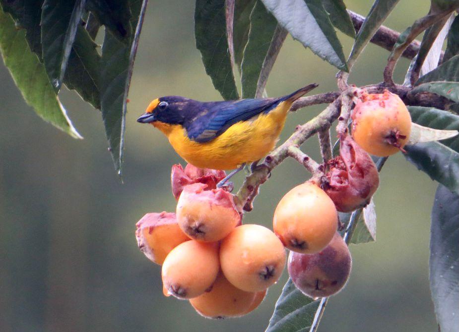 Balneário Camboriú fará parte de Roteiro de Observação de Aves