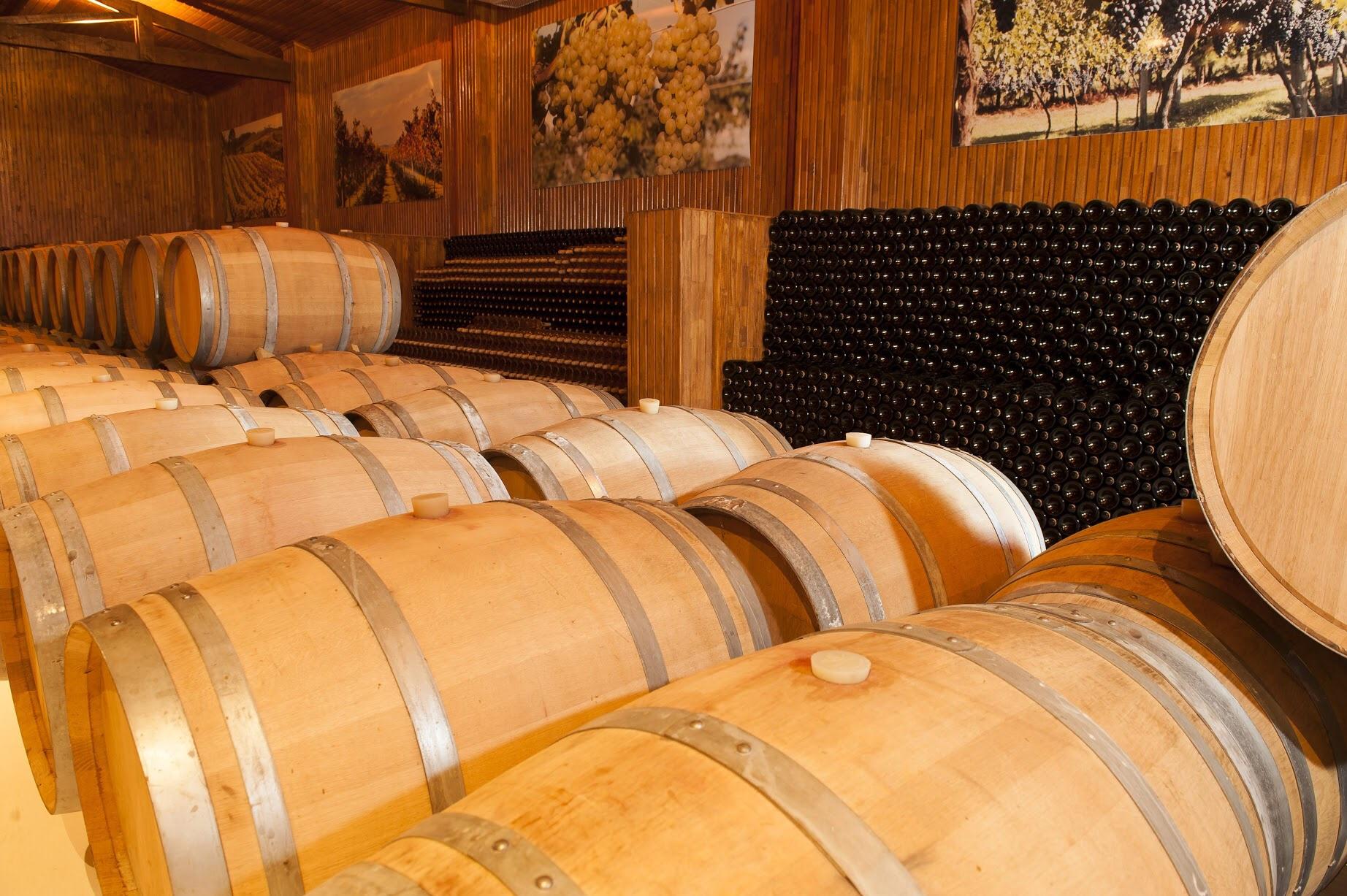Um brinde à pesquisa: Fapesc investe R$ 1 milhão em novos estudos para produção de vinho e uva em SC